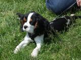 2005-05-23* Puppy