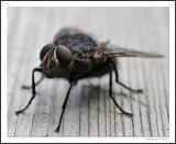 All Macro  -=*Bugs*=-