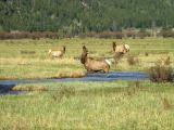 Elk Bath