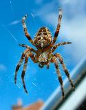 spider 1d.jpg