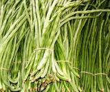 Foot long beans