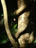 Twisted Tree Vine