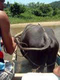 Daytrip on Mindoro