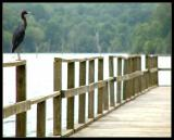blue-heron.jpg
