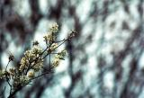 blossoms and buds