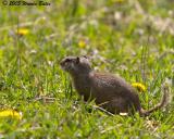 Little Mouse on the Prairie.jpg