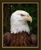 Zoo-Eagle_D2X_1991.jpg