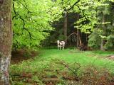 Dans les bois, une rencontre insolite.