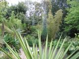 Exotic planting