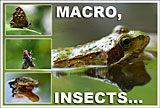 macro insects small
