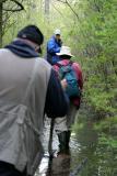 The boardwalk at Ponkapoag swamp