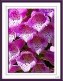Taken from George's flower garden