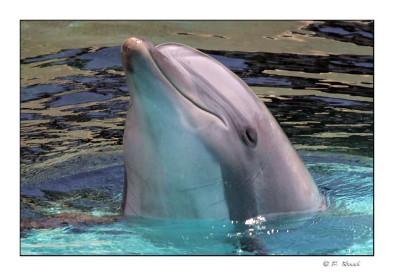 Le sourire du dauphin - Marineland dAntibes