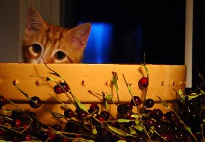 A Berry, Berry Cute Kitten