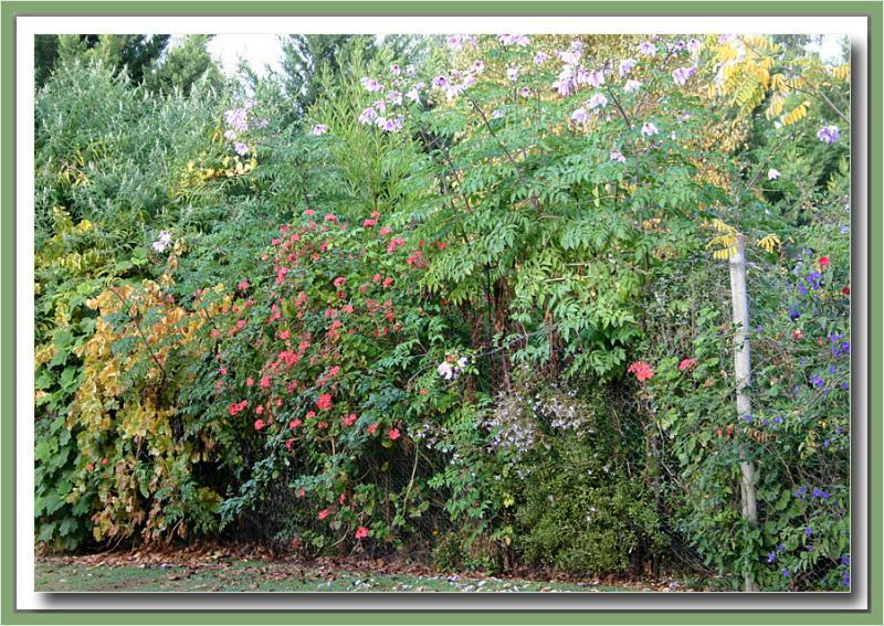 Garden fenceline Mintaro Cottage