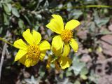Flora31.jpg