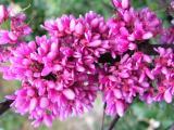 Blossom at Beit Shearim