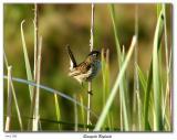 Screaming/singing bird