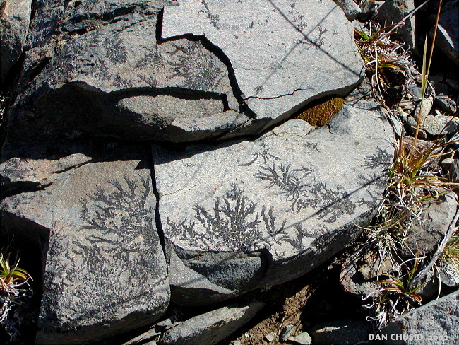 Plant Impressions On Rocks - II