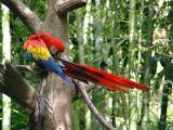 Feather Rainbow