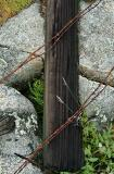 Downed Fence Post and Barbed Wire