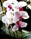 Orchid 03.jpg