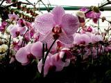 Orchid 09.jpg