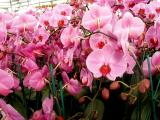 Orchid 12.jpg