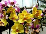 Orchid 14.jpg