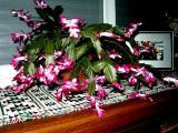 Chris. cactus 08.jpg