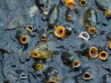 Feeding Frenzy (Motion - 2nd place)