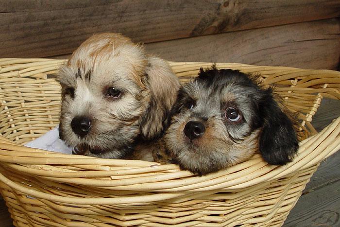 Two Precious Babies