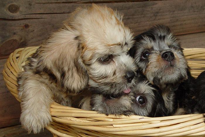 Cuddled Cuties