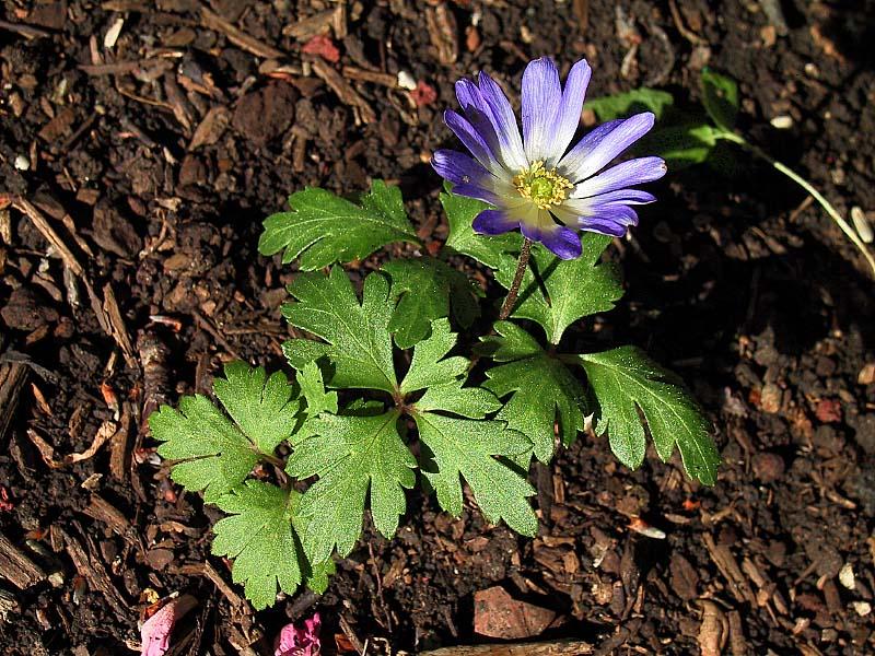 unknown_flower.jpg