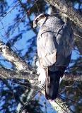 hawks__falcons
