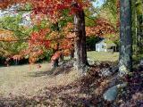 mill brook maple 4520b.jpg