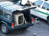Bomb snifing dog prepares to go to work at Port Everglades.