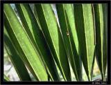 Leaf pattern with Spider