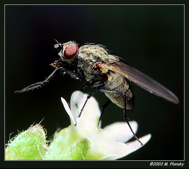 Fly Grooming