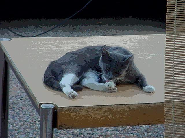 solarize photo of Smokey the cat