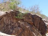 Petroglyphs at South Mountain Park
