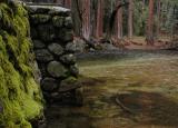 Mossy bridge