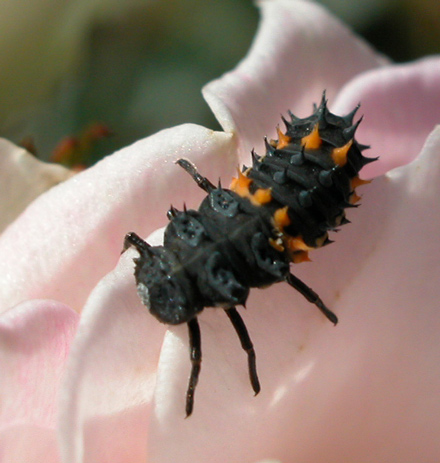 ladybirdbaby