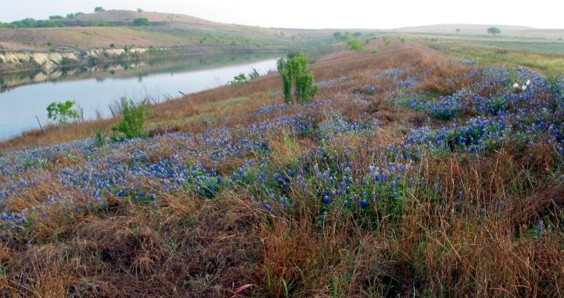 Spring Bluebonnets overlooking the Catfish Pit - April, 2003