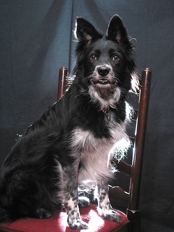 Ever tried photographing a black dog against a black background?