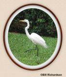 egret oval frame.jpg
