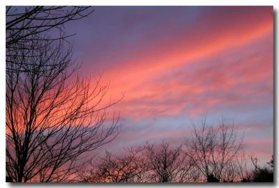 Pink Twilight Splendor