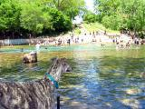 Roman chillin at Barton Springs