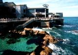 monterey bay aquarium open pool