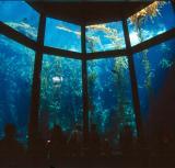 monterey bay aquarium inside